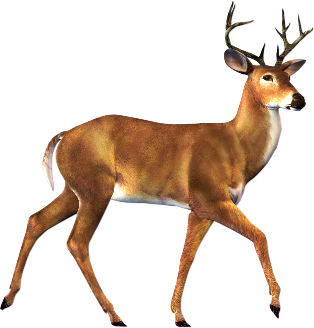 Deer buck clipart free clip art images image 0