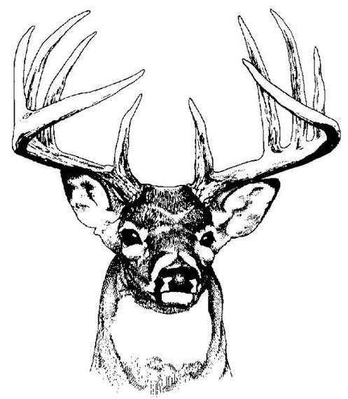 Deer Head Art Clipart To Use Clip Resource