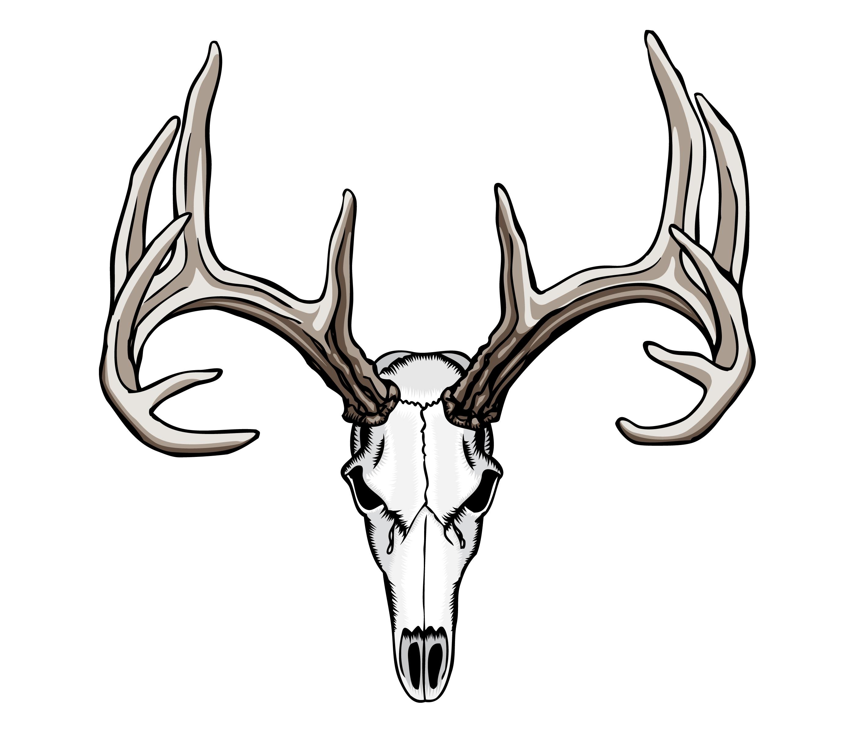 Deer Skull Drawing 21296 Whitetail Deer Skull Tattoos Jpg
