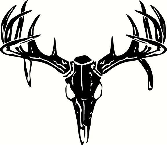 Deer Skull Images