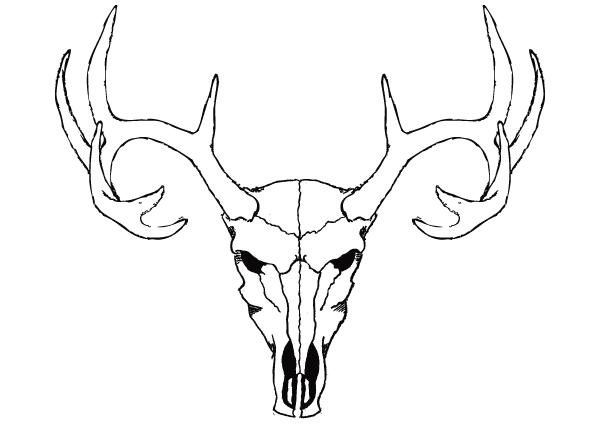 Deer Skull Vector Free .