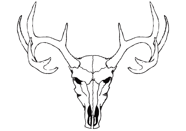 Deer Skull Vector Free .-Deer Skull Vector Free .-15