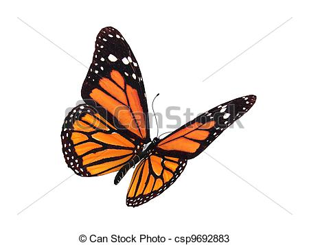 Digital Render Of A Monarch Butterfly-digital render of a monarch butterfly-10