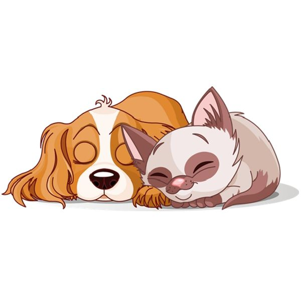 Cat pet. Dog and clipart look