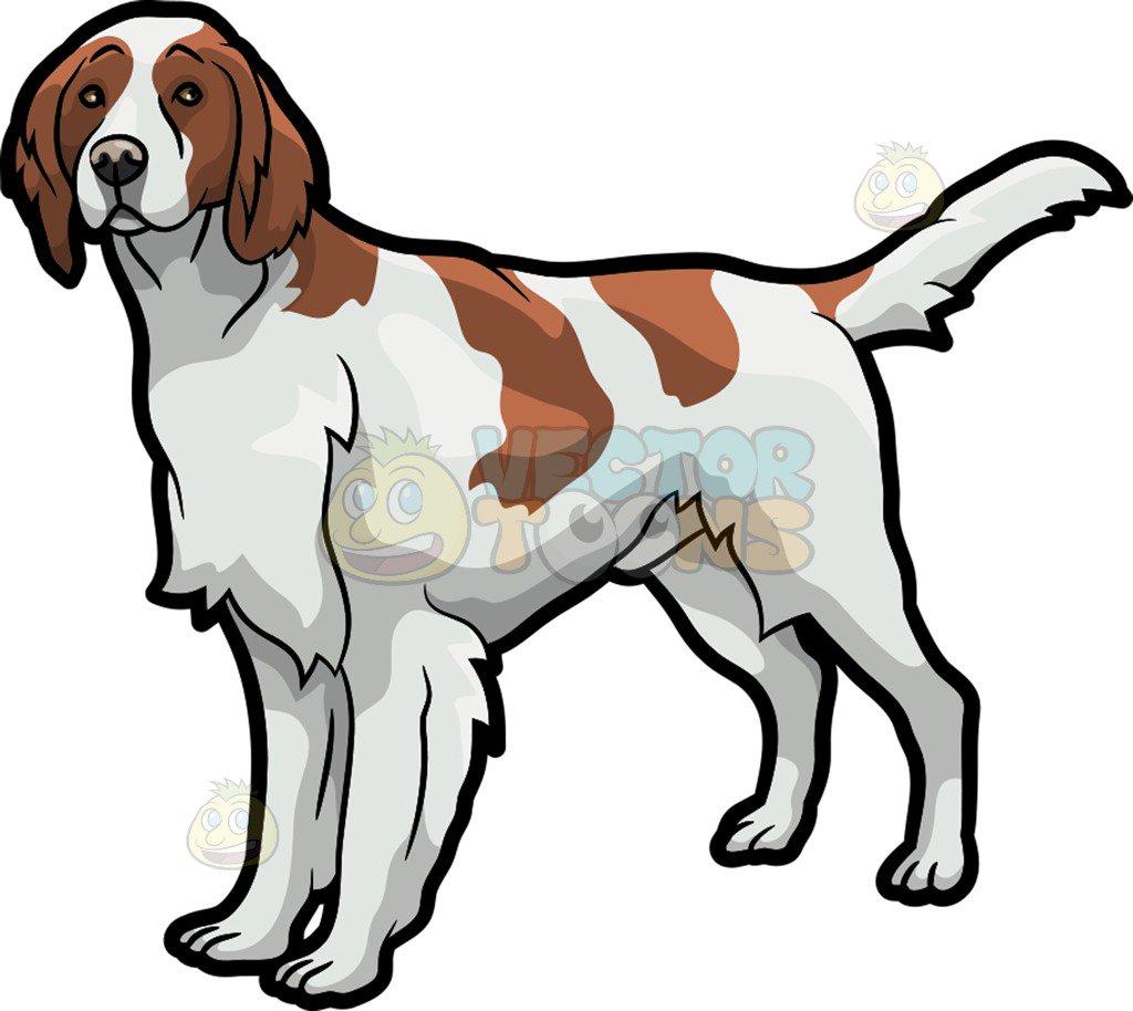 An observant Irish Setter pet dog-An observant Irish Setter pet dog-11