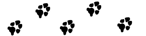 Dog paw print divider with the paw prints going toward the right side of the page