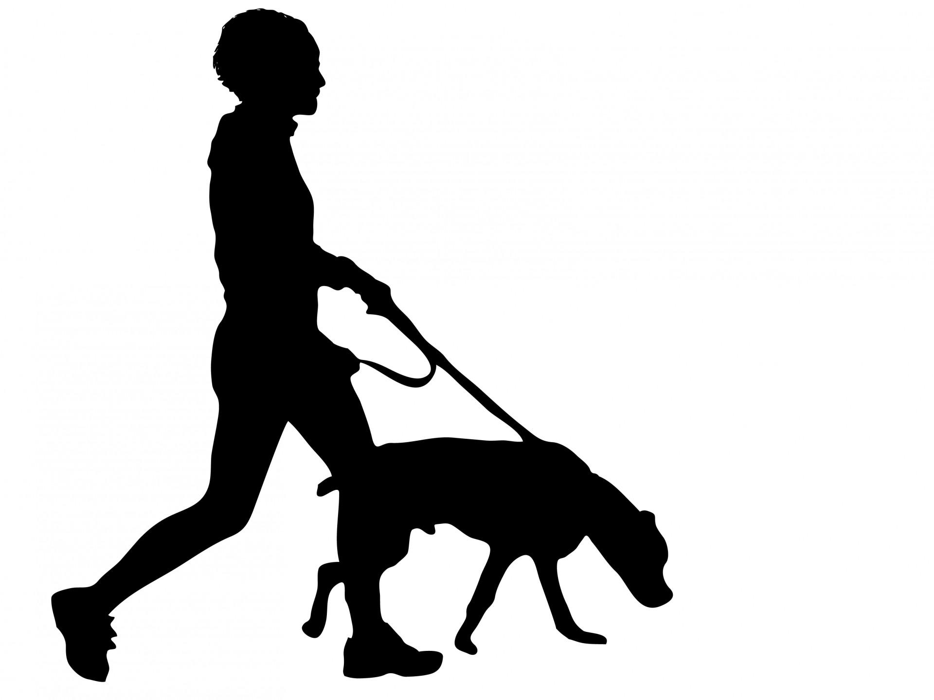Dog Walking-Dog Walking-16