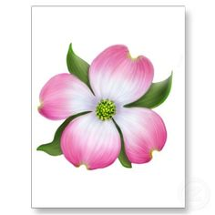 dogwood flower- for the tattoo