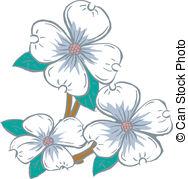 dogwood flowers - Flowering Dogwood