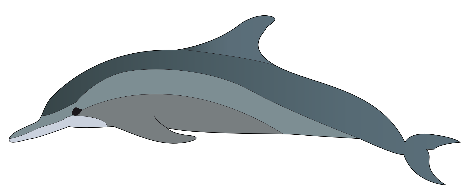 Dolphin Clipart Dolphin 1979px Png-Dolphin Clipart Dolphin 1979px Png-10