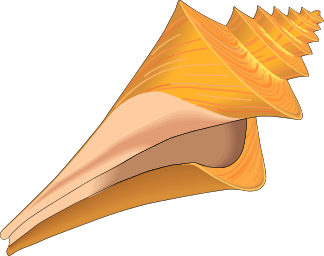 Domain Seashell Clip Art .
