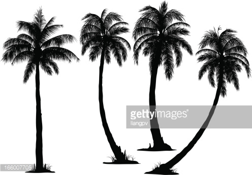 doodle coconut tree clipart - Coconut Tree Clipart