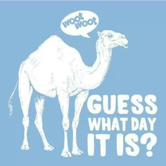 Download Hump Day Camel Clipart
