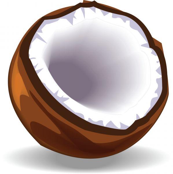 Download Open Coconut Clipart-Download Open Coconut Clipart-13