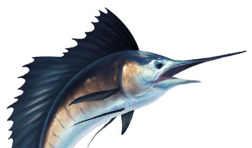 6+ Sailfish Clipart | ClipartLook