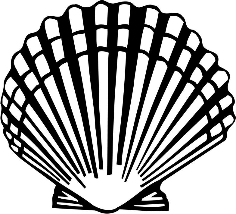 Download Scallop Shell Clipart
