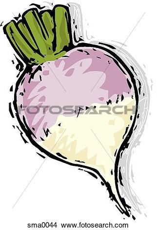 Drawing - turnip. Fotosearch - Search Cl-Drawing - turnip. Fotosearch - Search Clip Art Illustrations, Wall Posters, and EPS-17