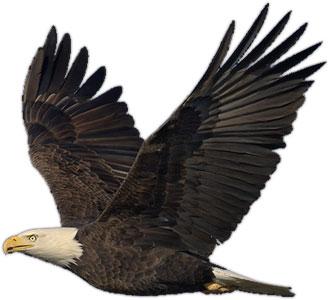 Eagle Animated Clip Art Dromhfb Top 2-Eagle animated clip art dromhfb top 2-10