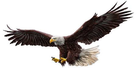 Bald Eagle Flying Hand Draw And Paint On-Bald eagle flying hand draw and paint on white background vector  illustration.-4