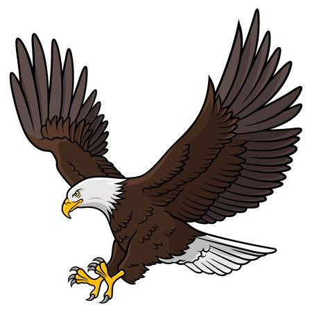 Colored Graphic Of American Bald Eagle O-Colored graphic of american bald eagle on white backdrop illustration.  Illustration-10