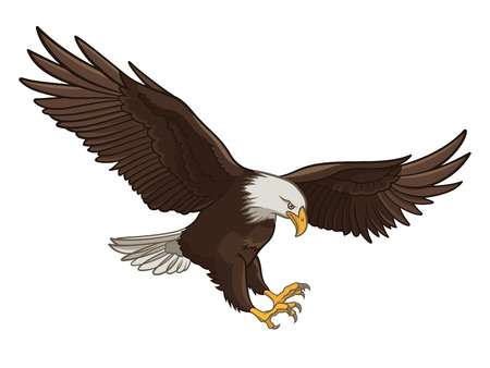 Vector Illustration Of A Bald Eagle, Iso-Vector illustration of a Bald Eagle, isolated on a white background-20