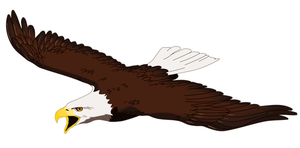 Eagle gallery free clipart pictures