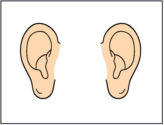 Ear Anatomy Clip Art For Cust