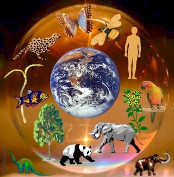 Ecosystem Clipart. Ecosystem 20clipart. mrsschlangensscience