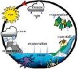 Ecosystem.