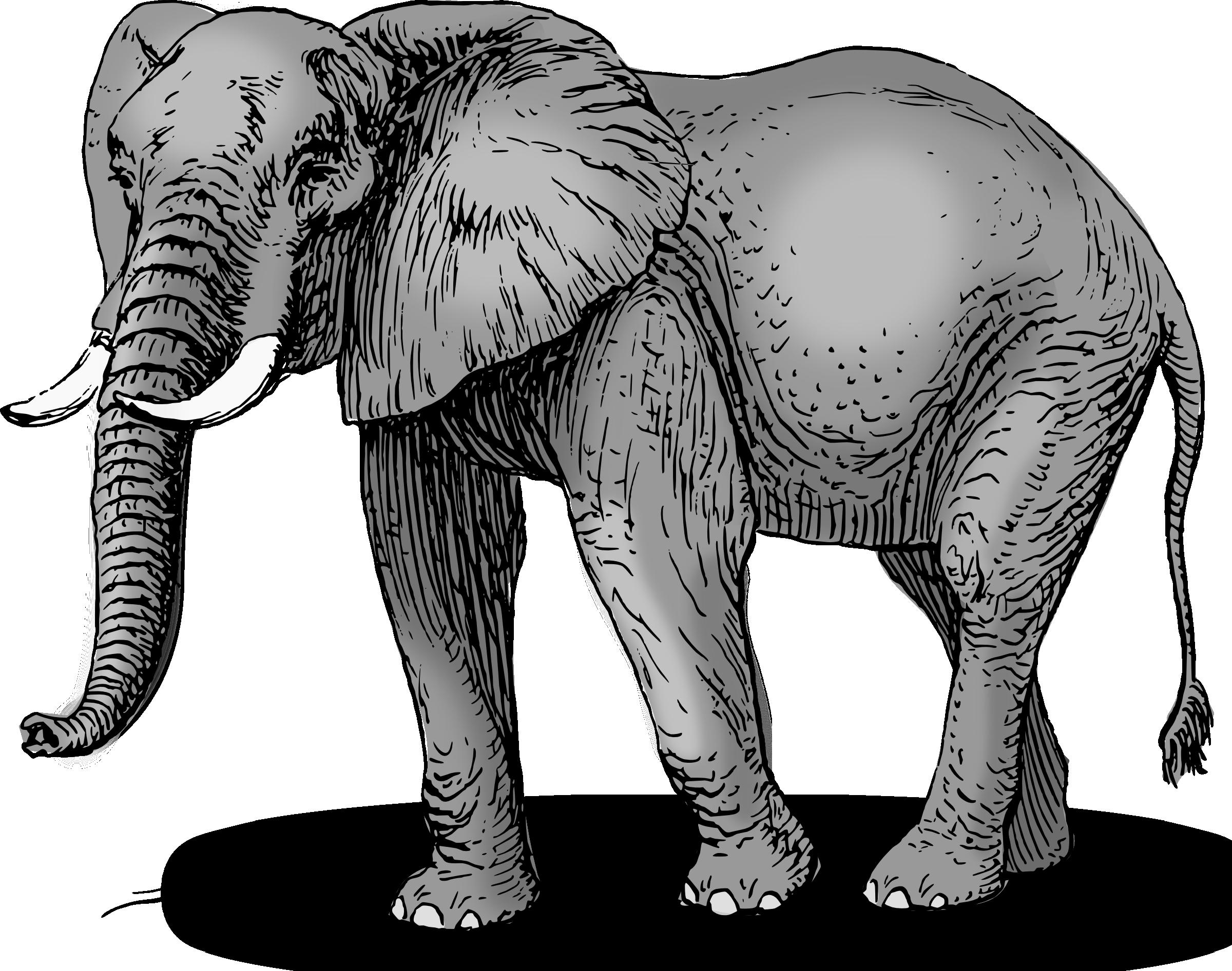 Elephant Clip Art Image 3-Elephant clip art image 3-10