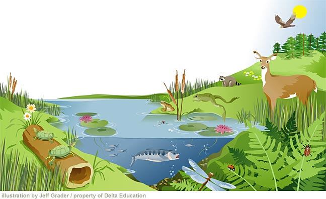 Environmental Issues Selection 12 Ecosystems And Human Well Being
