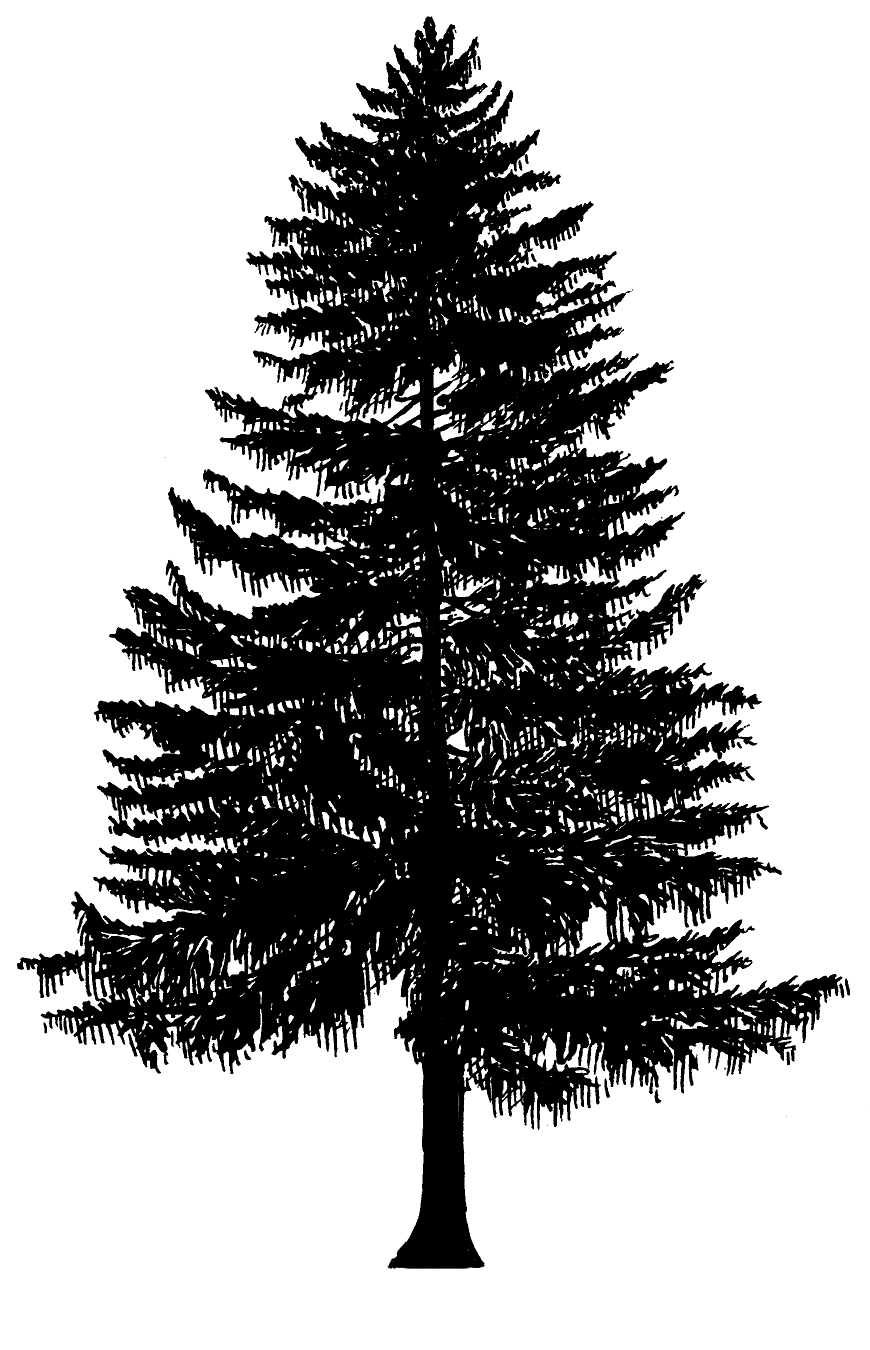 Evergreen Tree Clipart | czar.tk