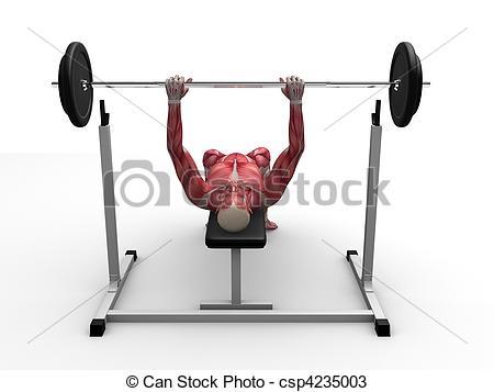 Male Workout - Bench Press - Csp4235003-male workout - bench press - csp4235003-10
