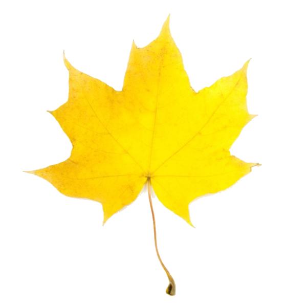 Fall Leaf 2 Clip Art-Fall Leaf 2 Clip Art-10