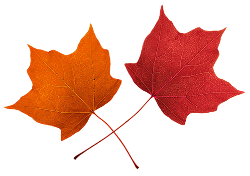 Fall Leaves Clip Art Beautiful Autumn Cl-Fall Leaves Clip Art Beautiful Autumn Clipart Amp Graphics-6