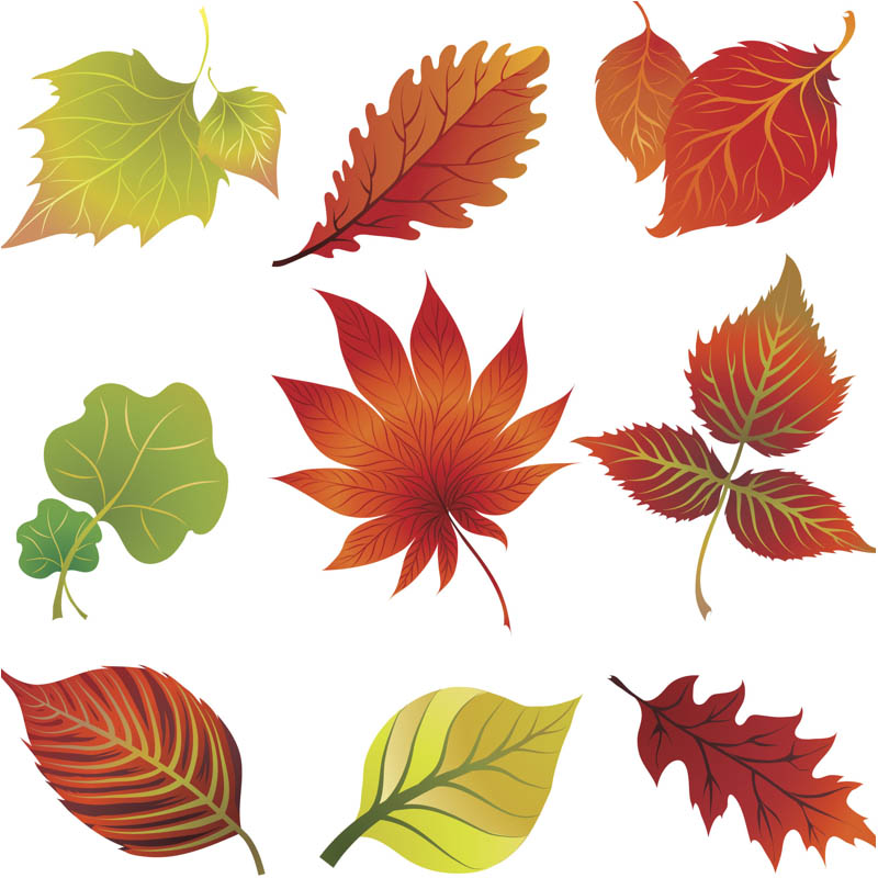 Fall Leaves Clip Art Vector Vector Graph-Fall Leaves Clip Art Vector Vector Graphics Blog-12