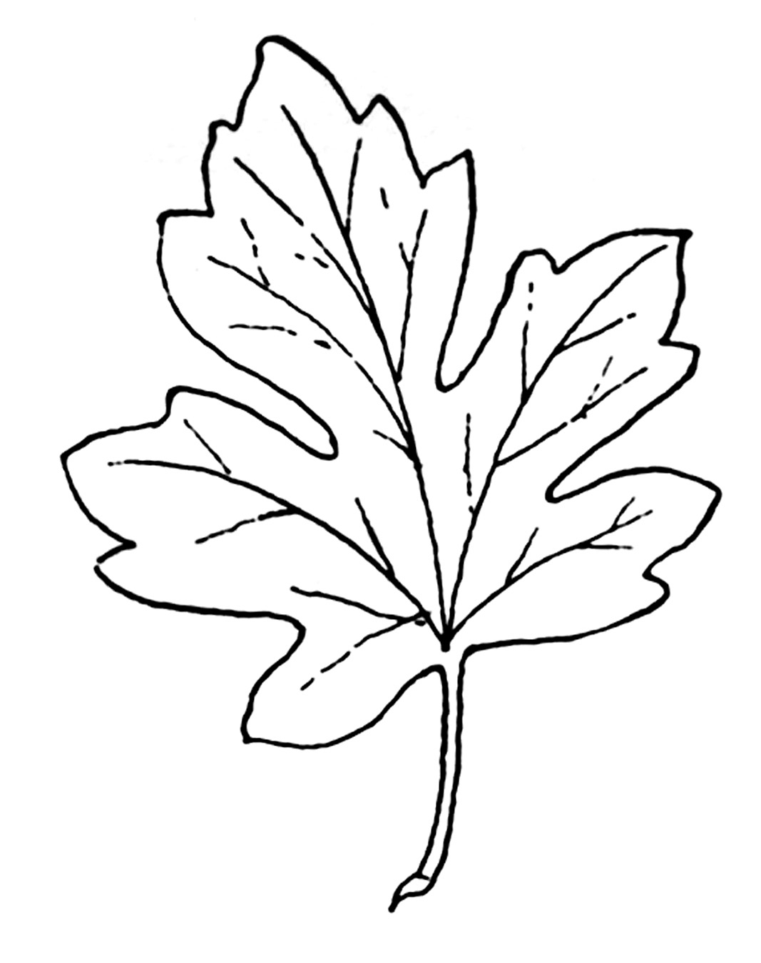 Fall Leaves Clipart Black And-fall leaves clipart black and-5