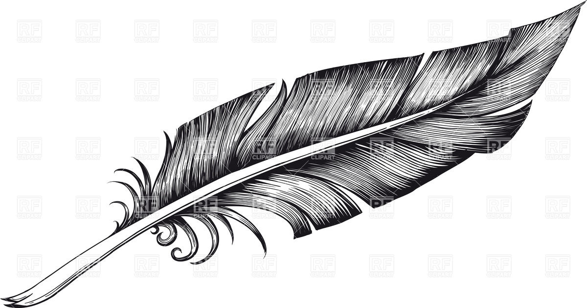 Feather clip art to download .