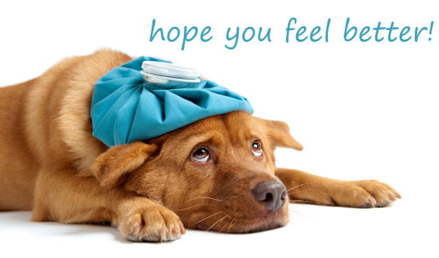 Feel Better Soon Images Dogs Images Pict-Feel Better Soon Images Dogs Images Pictures Becuo-9