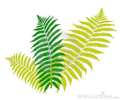 Fern Clipart Fern Leaf 6288775 Jpg-Fern Clipart Fern Leaf 6288775 Jpg-7