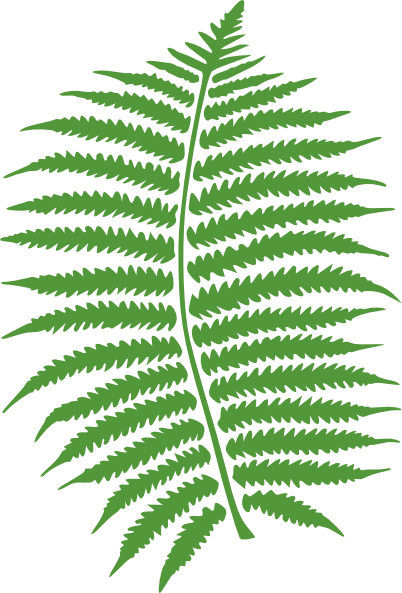 Fern Clipart Hd Walls Find Wa - Fern Clipart