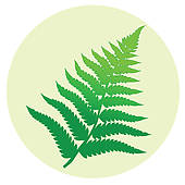 Fern Leaves U0026middot; Fern Leaf-fern leaves u0026middot; Fern leaf-10