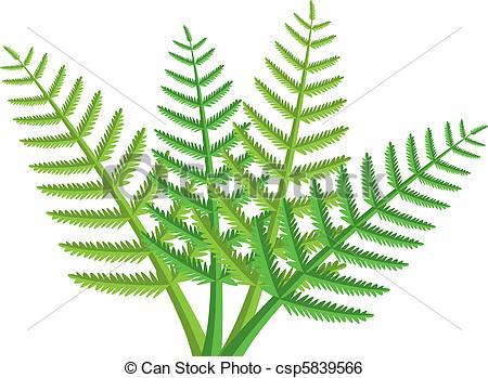 ... fern leaves - vector design of green-... fern leaves - vector design of green fern leaves-13