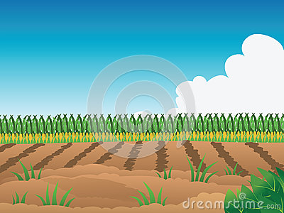 Crop Field Clipart #1