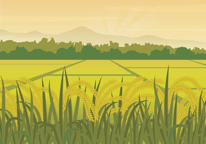 rice field clipart 8