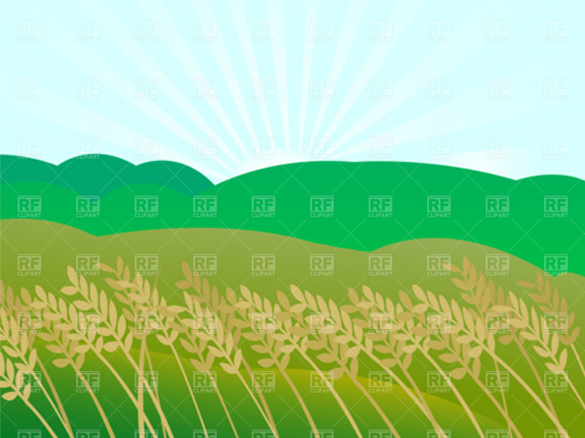 rice field clipart 5