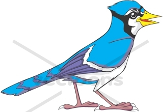 Fighting Blue Jay Clipart 320 x 220