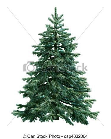 Fir tree isolated on white - csp4832064-Fir tree isolated on white - csp4832064-6
