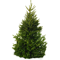 Fir-Tree Png Clipart PNG Image-Fir-Tree Png Clipart PNG Image-13