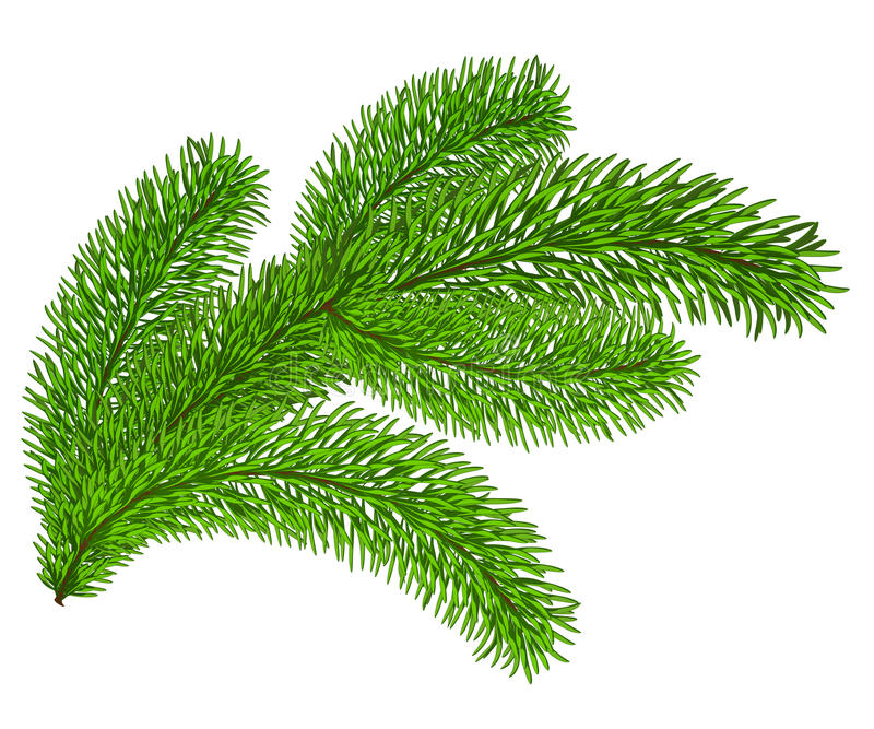 Twig of evergreen fir on white. Vector c-Twig of evergreen fir on white. Vector clip-art-19
